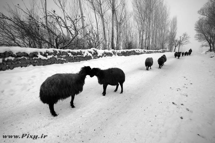 http://dl-dj.persiangig.com/Pic-Web/Iran-Ziba/Barf/7753731-lg.jpg