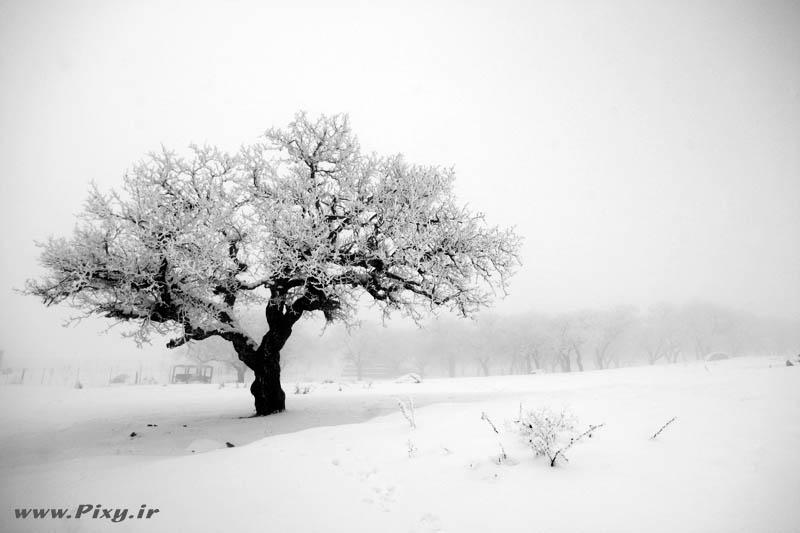 http://dl-dj.persiangig.com/Pic-Web/Iran-Ziba/Barf/8413674-lg.jpg